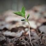 plant-864529__180